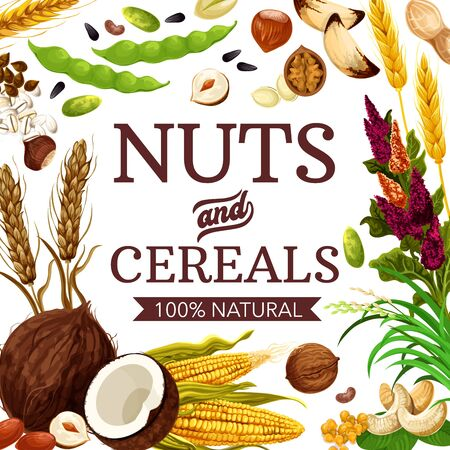 Nuts, cereals and grains, healthy food poster. Vector GMO free natural wheat and rye, coconut and buckwheat cereal, corn and oatmeal, natural hazelnut, walnut and almond