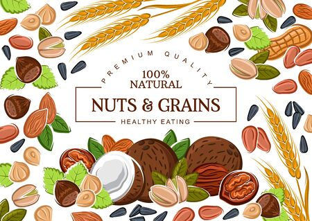 Nuts, grains and organic cereals, natural healthy food nutrition. Vector coconut, hazelnut and walnut, sunflower seeds and pistachio nuts, wheat and rye, buckwheat cereals