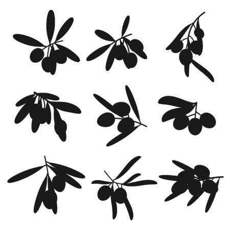 Organic olives branches silhouettes, premium quality food and olive oil products. Vector olives harvest, extra virgin oil or marinated pickles package symbols