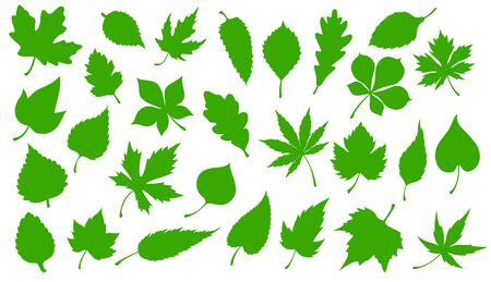 Tree green leaves isolated silhouette icons. Vector forest trees leaf of maple, rowan or chestnut and oak, elm or aspen and poplar, eco nature environment and flora symbols