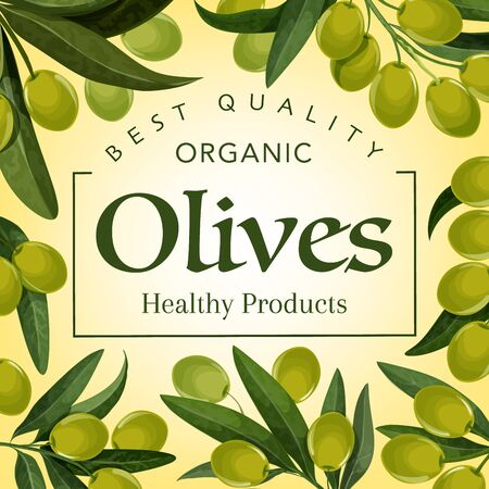 Organic green olives, premium quality food products and olive oil poster. Vector green olives harvest, extra virgin oil or marinated pickles package, healthy food