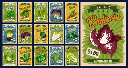 Salad greens and leaf vegetables vector design with organic farm food. Lettuce, spinach and chinese cabbage, basil, arugula and bok choy, chard, radicchio and corn salad, watercress and batavia Illustration
