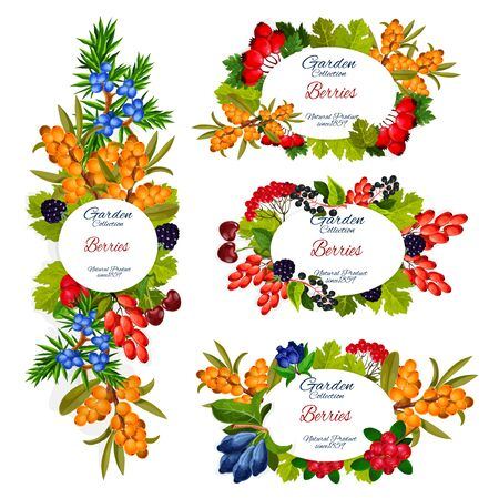 Berries and fruits vector design of wild and garden food. Cherry, blackberry and cranberry, barberry, honeysuckle and hawthorn, juniper, sea buckthorn and hackberry, agriculture harvest themes Illusztráció