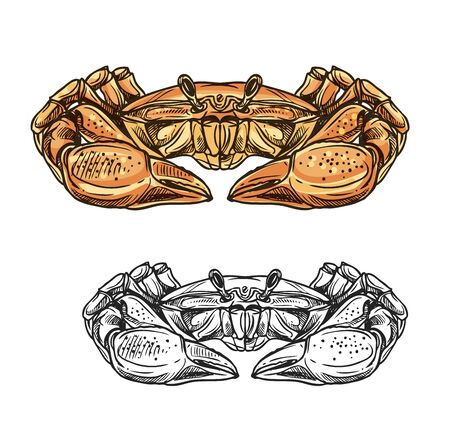 Crab sea animal sketch of seafood and ocean shell fish vector design. Marine crustacean, red hermit crab with big claws. Underwater shellfish, seafood restaurant or fish market themes