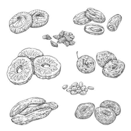 Dried fruits and candied berries isolated sketches. Vector monochrome pineapple and banana, damson fruit and figs. Raisins and prunes, apricots, date, nuts and cherry snacks, natural healthy food Illusztráció