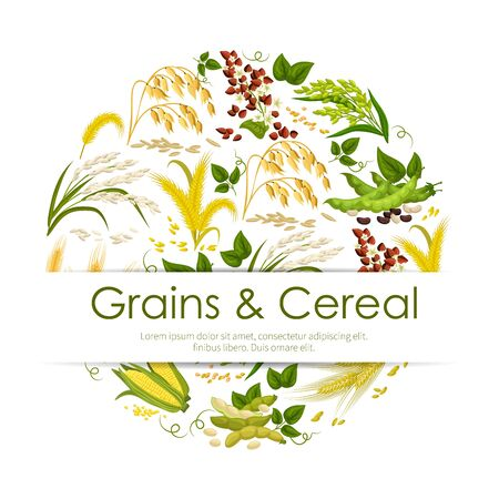 Grains and cereals, frame of plants and seeds. Vector food products, corn and green pea pods, legume beans, ears of wheat and rye. Buckwheat and rice, barley and millet, oat Ilustrace