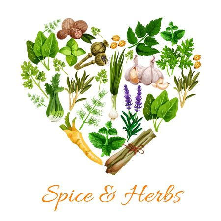 Spice and herbs heart shape. Vector lavender flowers and leek, nutmeg, green basil, lemongrass and parsley. Garlic and mint, marjoram and tarragon, poppy seeds, cardamon, dill and sage, celery Illustration