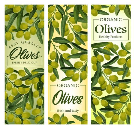 Olives branches, cluster of ripe fruits with leaves. Vector olives hanging on leafy branches. Traditional extra virgin oil cooking ingredient, harvest of raw organic olives, vegetarian plant