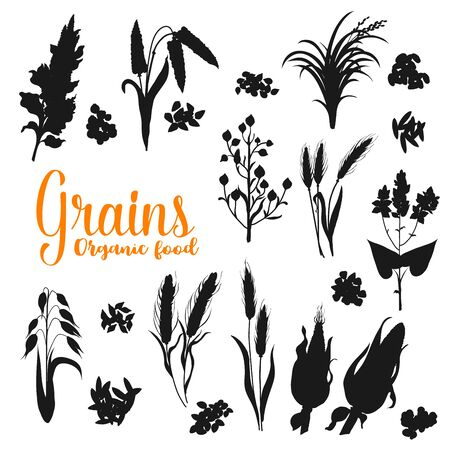 Grains, monochrome cereals. Vector silhouettes of rye and wheat ears, oat and millet, rice and barley, corn cobs and buckwheat. Agriculture harvest and farm plants, seeds Ilustracja