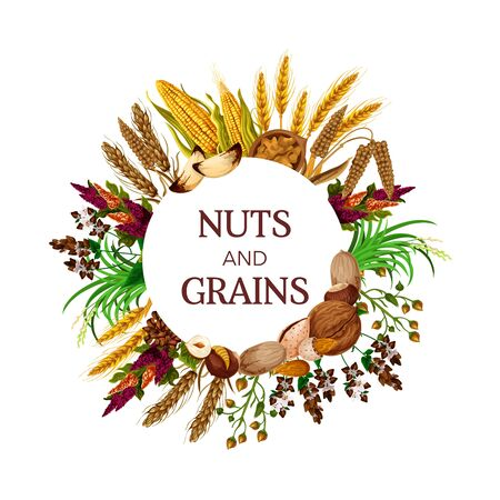 Nuts and grains, cereal food round frame. Vector kernels, peanut and pistachio, corns and almond, hazelnut and walnut, plants seeds. Wheat and buckwheat, rice and cashew, quinoa and millet, rye