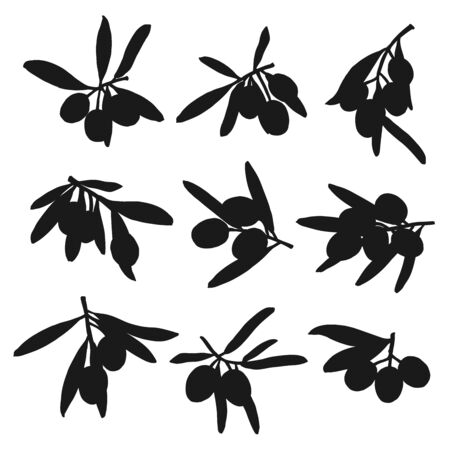 Silhouettes of olive fruits and leaves, monochrome extra virgin olive oil symbols. Vector branches isolated on white