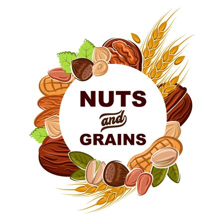 Nuts and cereal grains vector design of health food and superfood. Peanut, almond and hazelnut, walnut, pistachio and wheat frame with peels, pilled kernels and green leaves Illusztráció
