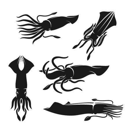 Squid sea animal or mollusk black silhouettes of seafood vector design. Ocean shellfish with waving tentacles, sea food and fish market, marine wildlife and aquarium themes