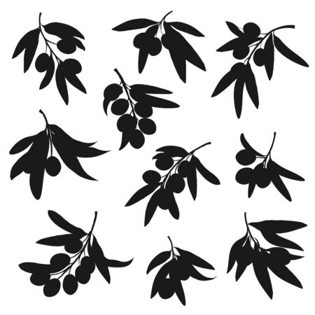 Olive tree branch black silhouettes with vector olive fruits and leaves. Oil food ingredients of Greece and Italy, mediterranean cuisine vegetable condiment and salad dressing design