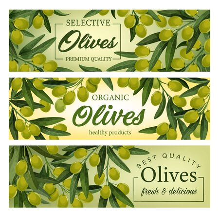 Olive tree branches with green fruits and leaves vector banners. Mediterranean olive food products, Italian and Greek oil, vegetarian cooking and natural cosmetics ingredient, packaging label design