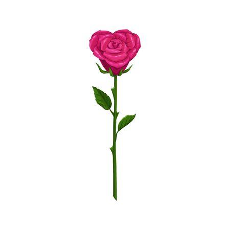 Rosa rosa sullo stelo con foglie fiore isolato. Pianta fiorita vettoriale a forma di cuore Vettoriali