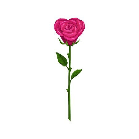 Pink rose on stem with leaves isolated flower. Vector blooming plant in heart shape Illustration