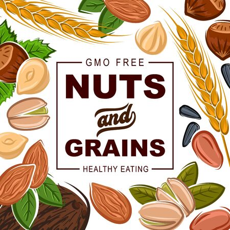 Nuts and grains, natural healthy food organic cereals nutrition. Vector GMO free coconut, hazelnut or walnut and almond, sunflower seeds and pistachio nuts, wheat and rye or buckwheat grain