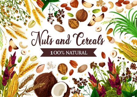견과류, 시리얼, 곡물, 건강한 유기농 식품. 벡터 GMO 무료 천연 슈퍼푸드 밀, 호밀 또는 메밀 시리얼, 옥수수 및 오트밀, 헤이즐넛, 코코넛 및 아몬드 견과류