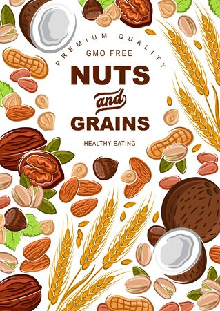 Cereal grains and nuts organic food nutrition. Vector healthy wheat and rye or buckwheat grain, coconut and hazelnut, walnut and almond, sunflower seeds and pistachio nuts