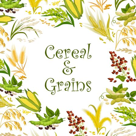 Cereal seeds and bean grains vector frame with rice, wheat and buckwheat, corn, millet and oat, soy, barley and lentil, maize, pea and rye, sorghum and flageolet plants. Vegetable protein food design