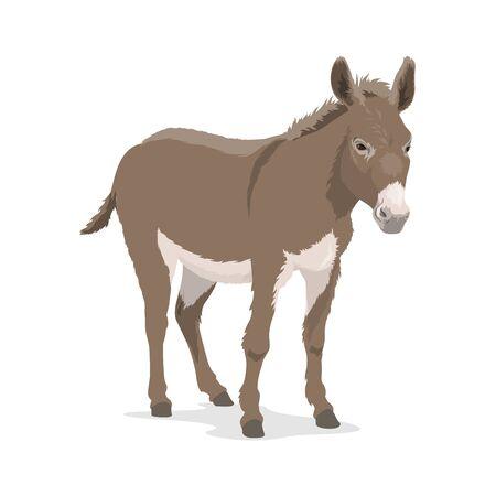 Asino o mulo, animale da fattoria del disegno vettoriale della famiglia di cavalli. Mammifero asino o asino con pelo e criniera grigi, muso e ventre bianchi, allevamento di bestiame e bestiame, mascotte dello zoo e temi della fauna selvatica