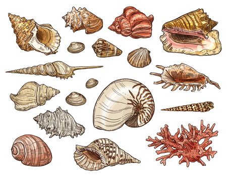 Seashell and coral sketches with vector sea beach shells of marine snail, clam and conch, mollusk, shellfish, scallop and cockleshell, tiger nautilus and knobbed whelk. Tropical ocean animal design Illustration