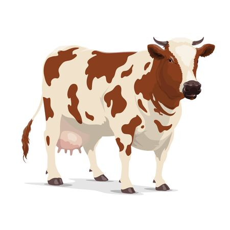 Cow animal vector design of milk or cattle farm. Heifer, bovine mammal with brown spots, star on head and white udders, horns and hooves, livestock farming, butchery or dairy product symbol
