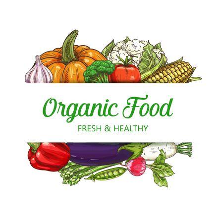 Vegetables, healthy food, vector sketch vegetarian salad veggies. Vegan natural vegetables pumpkin, corn, cauliflower and broccoli cabbage, horseradish or radish and green peas, tomato and asparagus