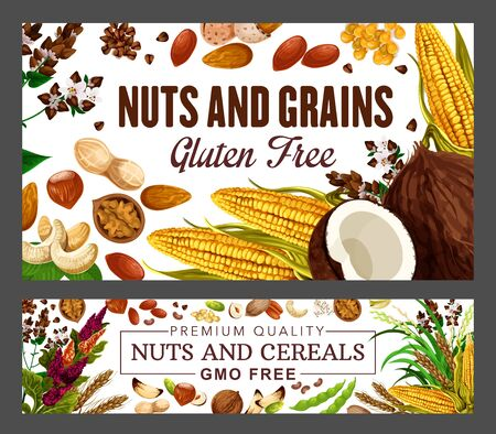 Nuts and cereal grains, beans, natural GMO and gluten free food nutrition. Vector wheat and rye or buckwheat grain, peanut and cashew, coconut, hazelnut or walnut and almond, corn Ilustrace