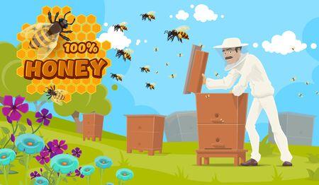 Producción de miel natural, apicultura y apicultor en colmenar. Cartel de comida de apicultura de vector, hombre apicultor en uniforme y máscara extrayendo miel de colmena, abejas en panal y flores