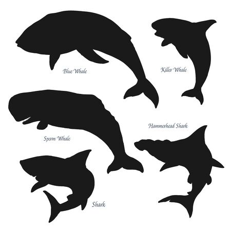 Ocean big giants whales and shark silhouette icons. Vector sea and ocean predators, blue and sperm whale, killer whale and hammerhead shark. Isolated on white