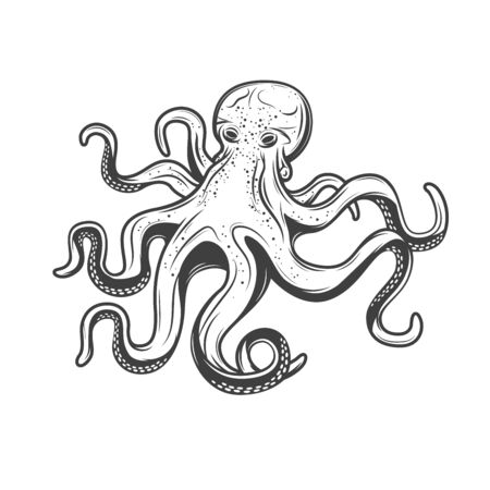 Octopus seafood, isolated sketch engraving icon. Vector marine underwater octopus with tentacles, underwater monster animals sea fishing, fishery sea food gourmet symbol