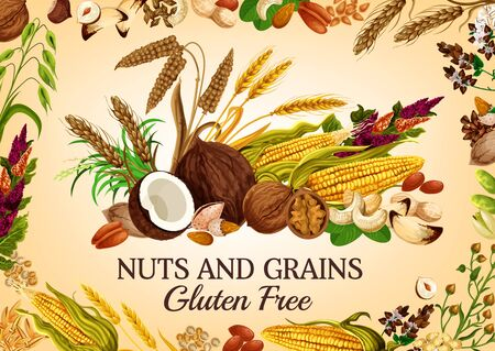 Nuts and cereal grains, natural organic gluten free food nutrition. Vector healthy vegan raw superfood corn, oatmeal, wheat and rye or buckwheat grain, coconut, hazelnut or walnut and almond Ilustrace