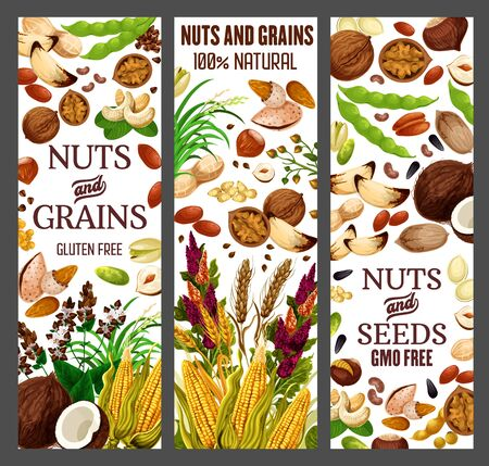 Nuts and cereals, natural organic GMO free grain, gluten free super food nutrition. Vector healthy vegan raw superfood corn, beans, wheat and rye or buckwheat grain, hazelnut, almond and walnut