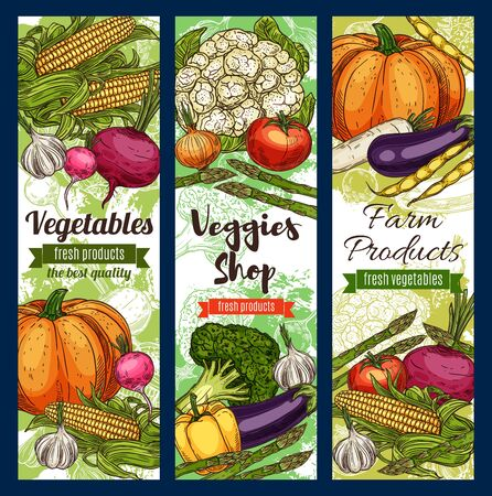 Vegetables and farm products sketches, veggies shop. Vector pumpkins and cauliflower, sweet corn and eggplant, radish and tomato. Garlic and pepper, asparagus and celery, beetroot and pea beans 向量圖像