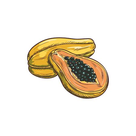 Pawpaw tropical fruit isolated papaya exotic food. Vector tropical pawpaw, food dessert