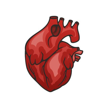Human heart hollow muscular organ that pumps blood. Vector circulatory systemisolated icon