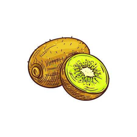 Kiwi whole exotic fruit isolated sketch. Vector tropical exotic vegetarian food, kiwifruit chinese gooseberry
