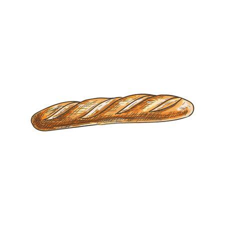 Francuski chleb na białym tle długi, wąski bochenek. Szkic wektor bagietki pszennej, ciasta żywności