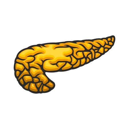 Human internal organ, pancreas icon, digestive system vector. Anatomy element, medicine  イラスト・ベクター素材