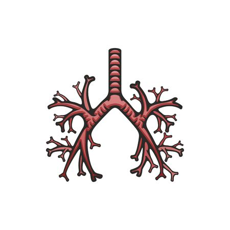 Human lungs internal structure vector. Pulmonary trachea and bronchi icon, body organs anatomy
