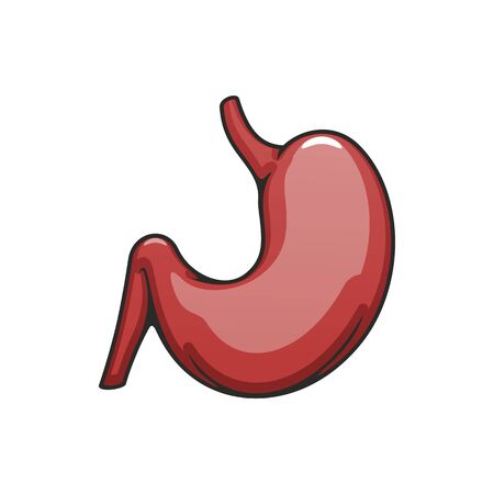Internal body organ icon, human stomach vector. Digestive system, anatomy element isolated