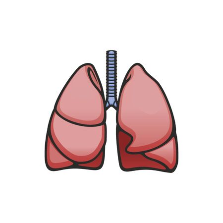Human lungs and trachea anatomy vector isolated icon. Structure of healthy respiratory system 向量圖像