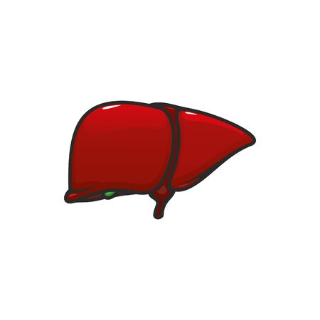 Liver anatomy isolated vector icon. Human internal organ, anatomical structure in digestion system