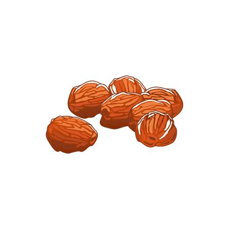 Dates dried fruits isolated sketch. Vector sugared natural food, vegetarian snack dessert Illusztráció