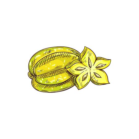 Carambola isolated whole and cut fruit sketch. Vector starfruit star shape slice, exotic tropical food