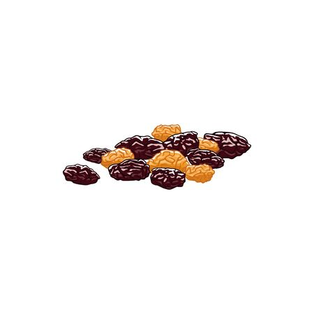 Dried raisins isolated berries of grapes sketch. Vector sugared fruit dessert Illustration