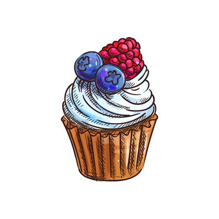 Cupcake, muffin with fruits and berries isolated sketch. Vector cake with blueberry and raspberry Ilustração