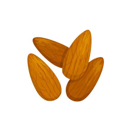 Shelled almond seeds isolated drupes of fruit. Vector edible seeds, natural vegetarian food  イラスト・ベクター素材